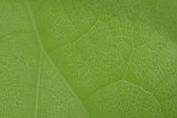 Zielony liść